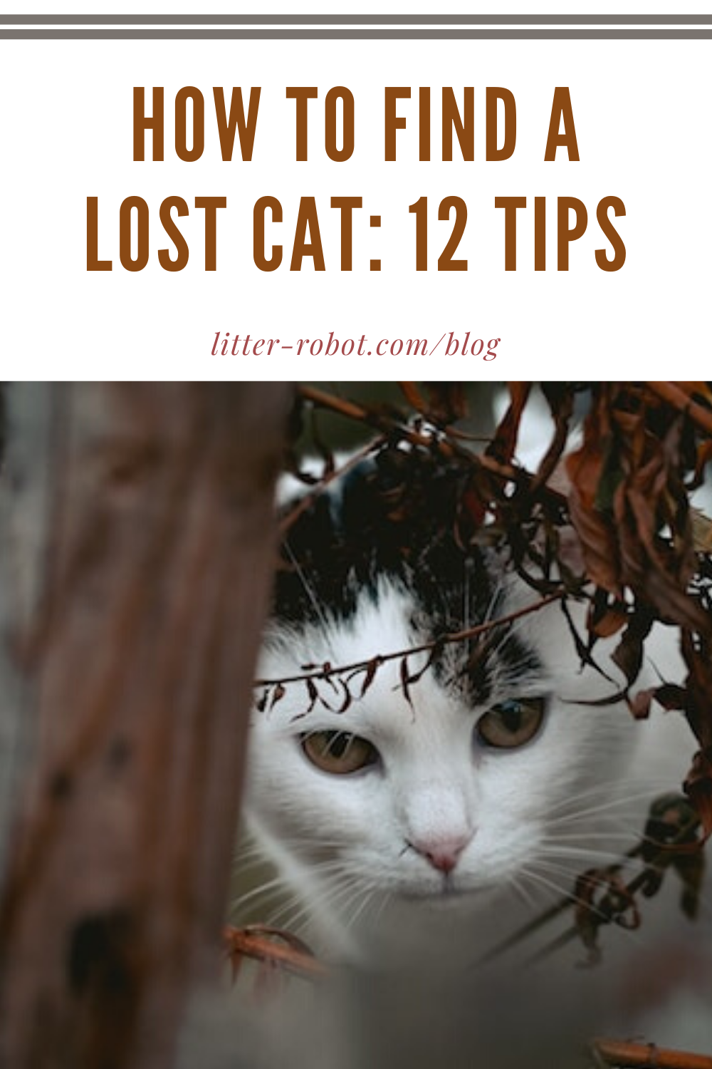 How To Find A Lost Cat 12 Tips Learn More On Litter Robot Blog Lost Cat Cats Cat Shelter