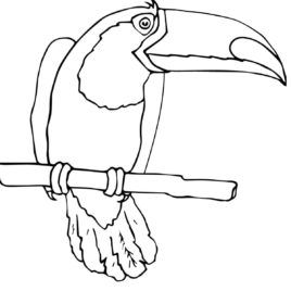 Toucan Coloring Page Printable Pages Things To Make Coloring
