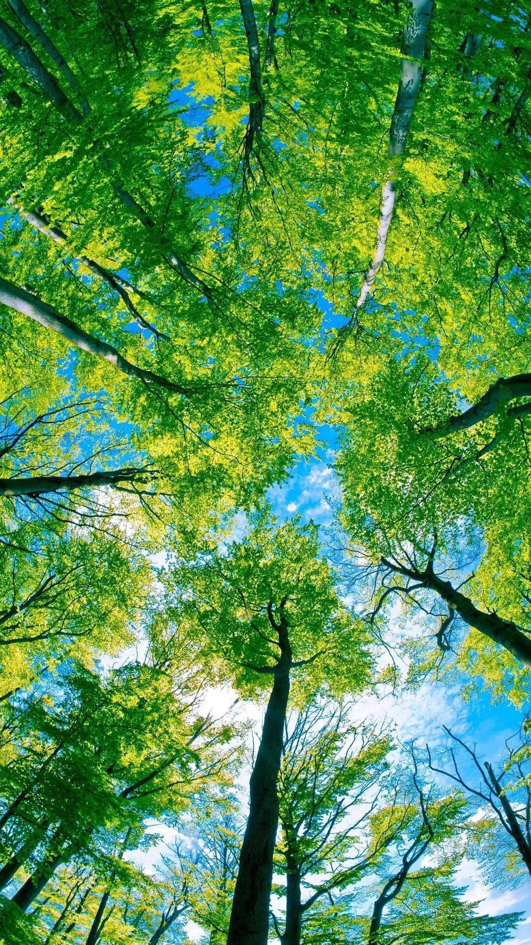 Pin Oleh Fia Di Nature Wallpaper Fotografi Alam Pemandangan Langit