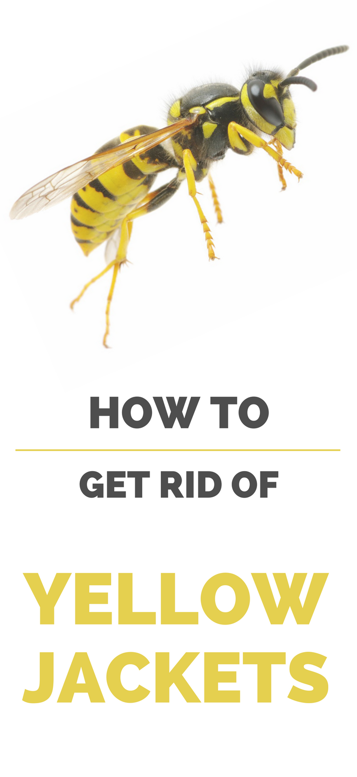 how to get rid of yellow jackets cleaning solutions pinterest