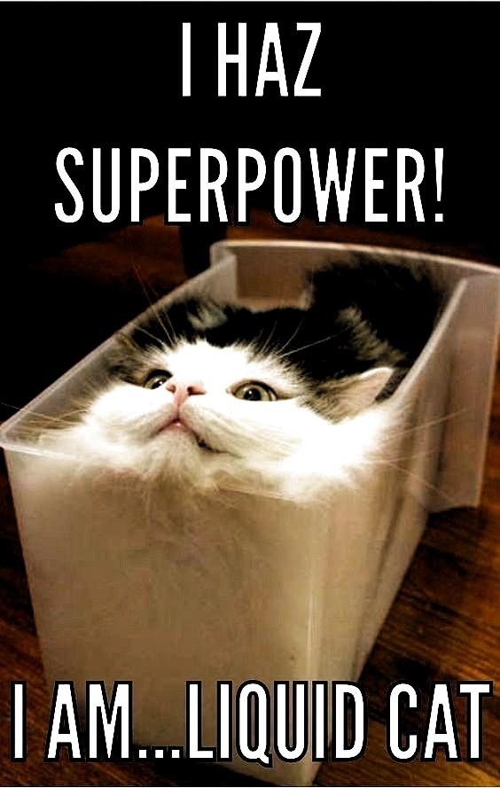 funny cat memes laughing so hard & funny cat memes ` funny cat memes laughing so