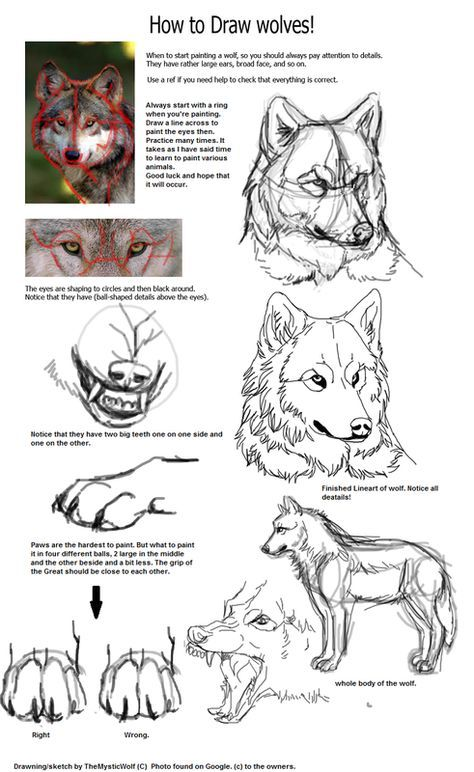 Photo of Canines