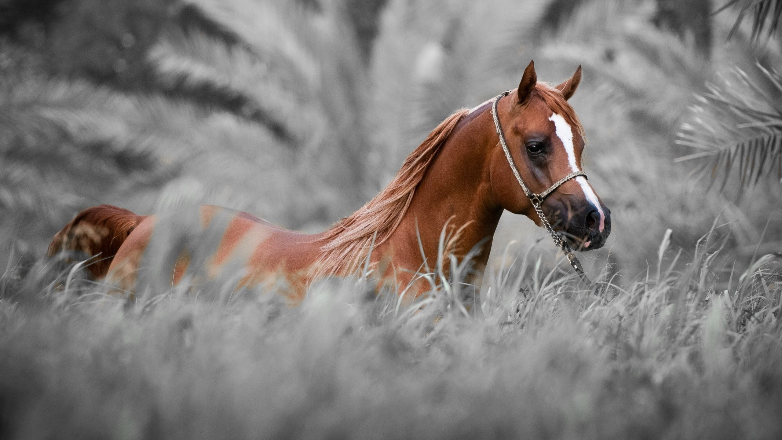 44 Animals Horse Wallpapers Download Beautiful Arabian Horses Horses Horse Background