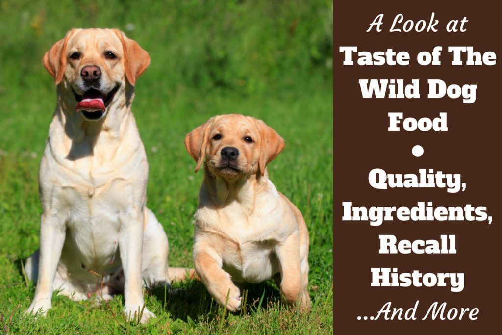 Taste Of The Wild Dog Food Reviews Ingredients Recall History