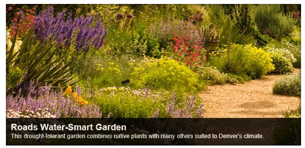This is a garden at the Denver Botanic Gardens. The photo caption: Roads Water-Smart Garden. This drought-tolerant garden combines native plants with many others suited to Denver's climate.