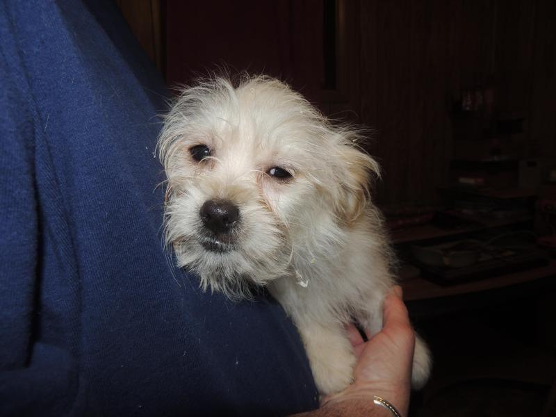 Adopt Elsa on Petfinder Pomeranian dog, Terrier mix dogs