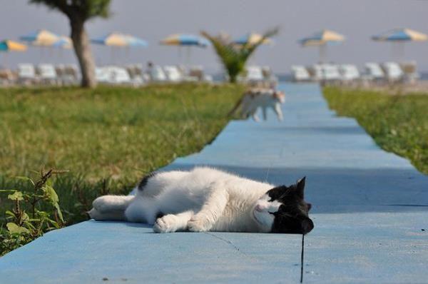 Anche i nostri amici felini hanno bisogno di vacanza! www.bbplanet.it