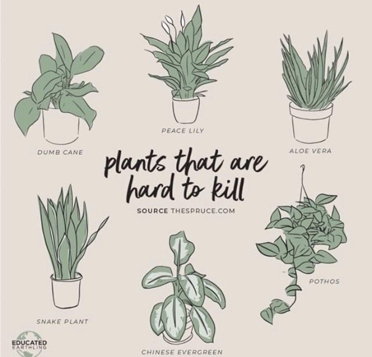 Pin by Liz Welsh on random Indoor plants, Plants, Plant puns