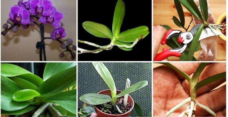 il nous r v le tous ses secrets pour faire refleurir une orchid e qui ne fleurissait plus. Black Bedroom Furniture Sets. Home Design Ideas