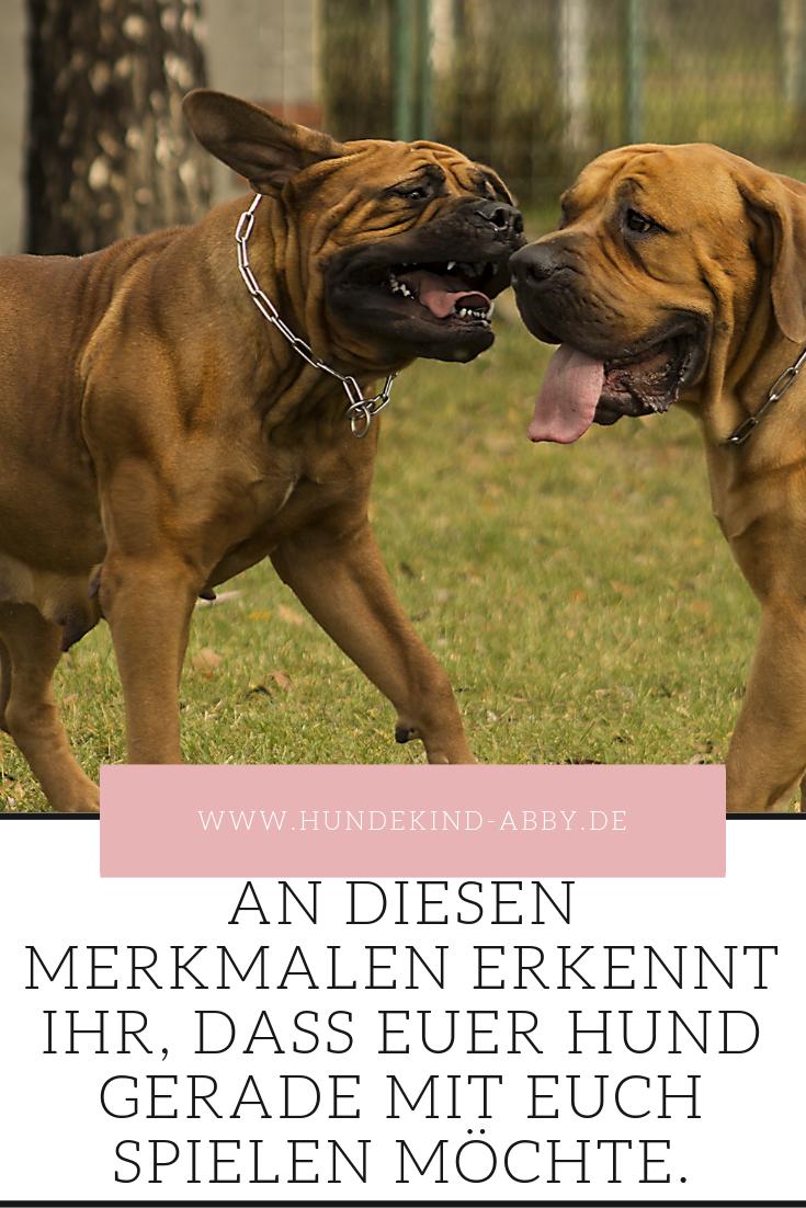 So Spielen Hunde Hunde Hundeerziehung Hundetraining