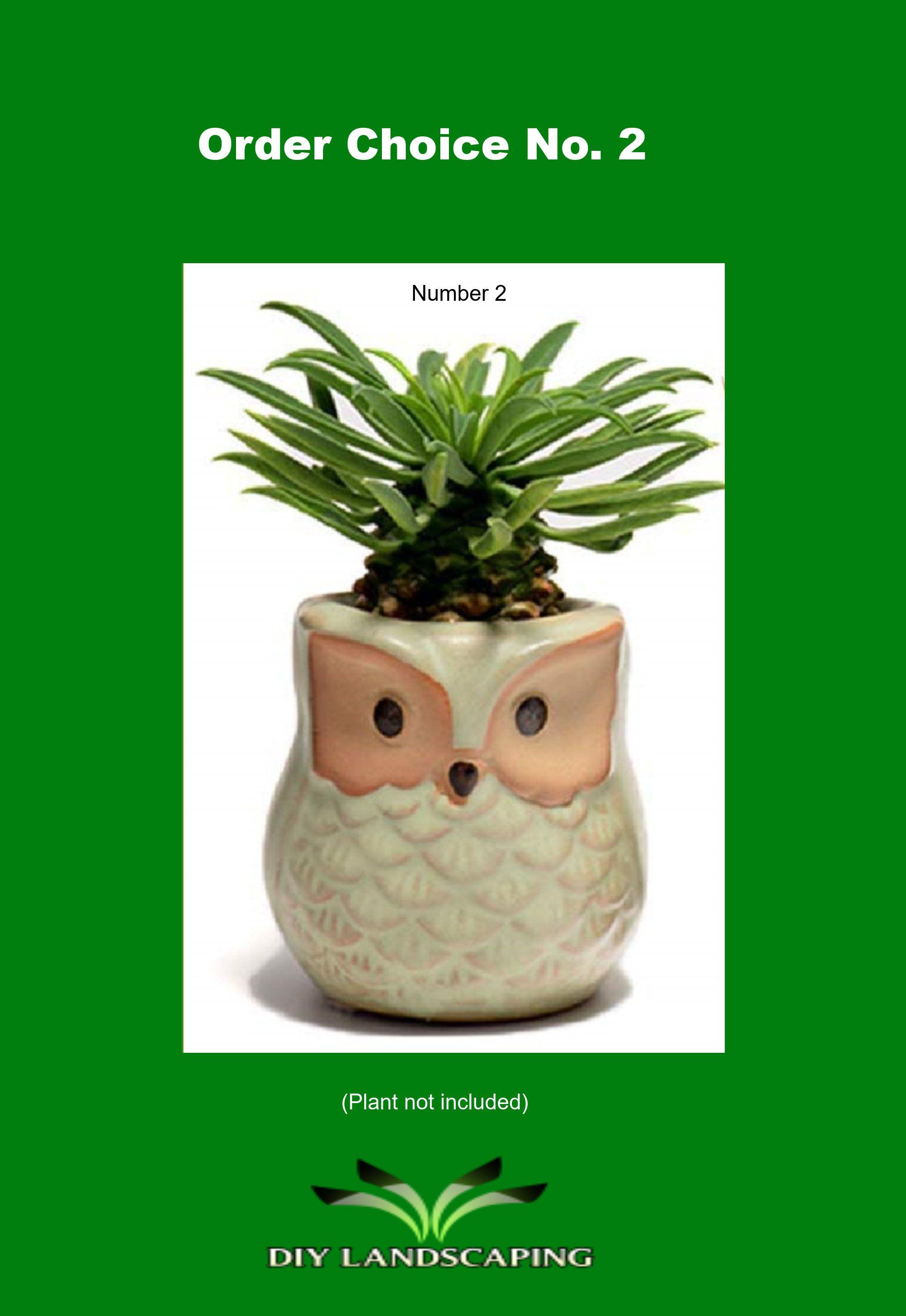 Cute ceramic owl planters small flower pot for succulent