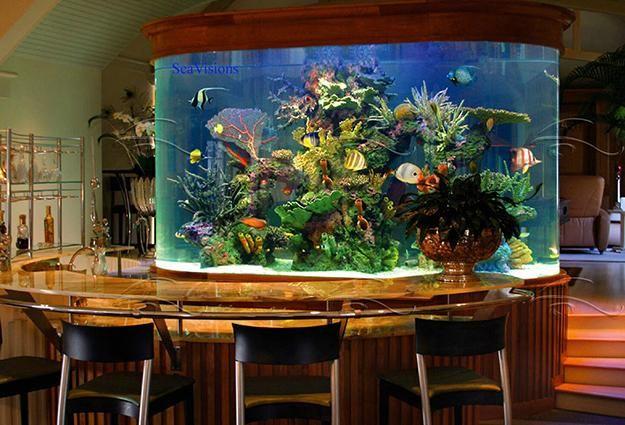 Unique Tropical Fish