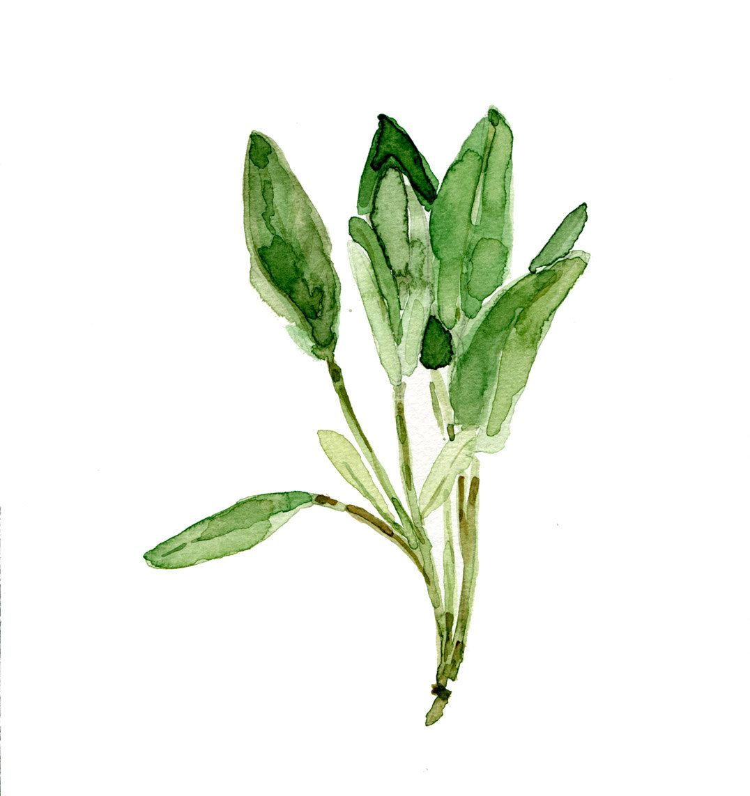 Sage leaves art print sage watercolor print herb print - Leaves paintings and drawings ...