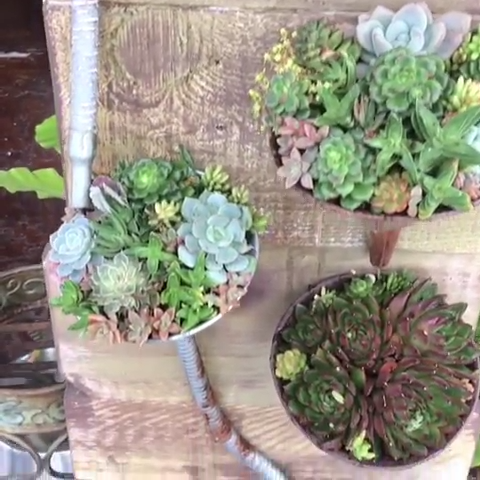 Photo of Vertical Succulent Display… WOW???