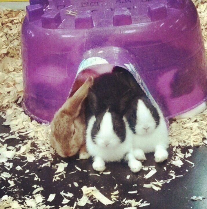 Bunnies At The Pet Store Pet Store Bunny Pets