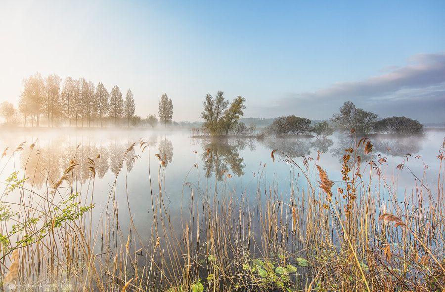 In the morning by Filip Van den Reeck / 500px