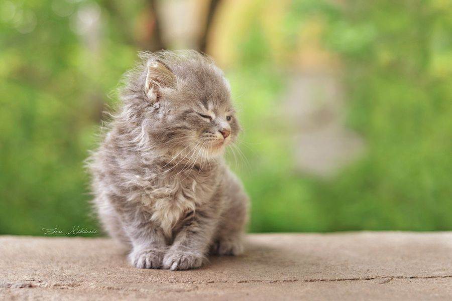 #kittenobsession