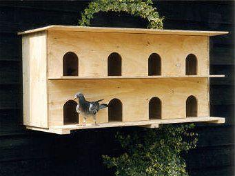 Homing Pigeons Nicefarming Com Pigeon Nest Pigeon Loft Bird House Feeder