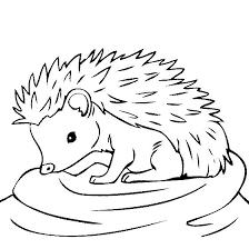 Image Result For Hedgehog Drawing Outline Malvorlagen Tiere Igelzeichnung Wenn Du Mal Buch