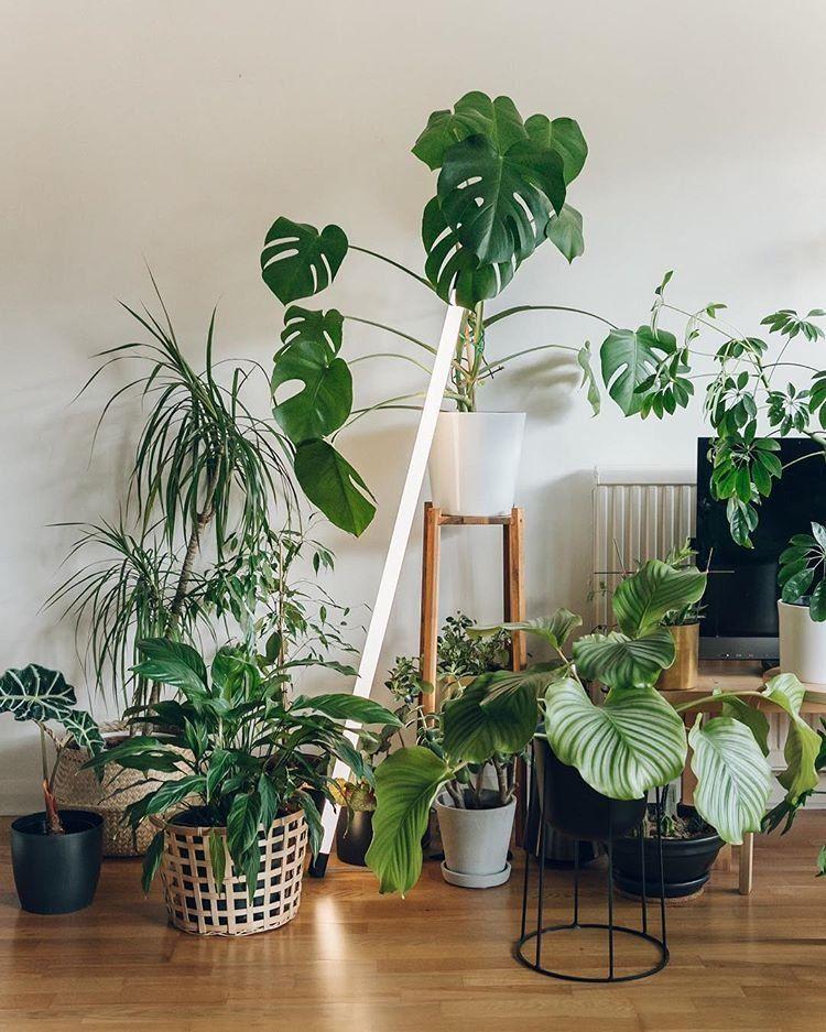 99 Great Ideas To Display Houseplants Indoor Plants Decoration Terracotta Plant Pots Plants Houseplants Indoor