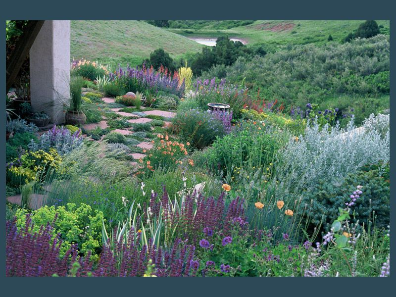 love Lauren Springer's work - here is her second garden on 100 acres. Flush with artmesia, salvia, poppies, penstemon.
