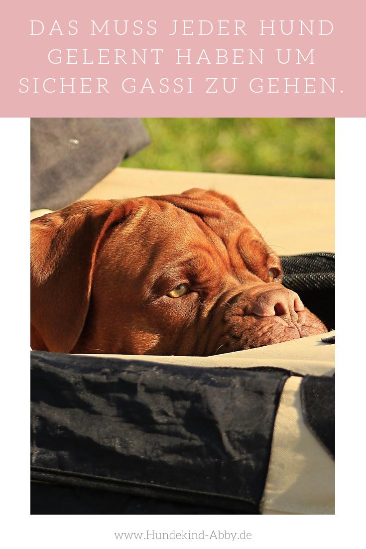 So Lasst Euer Hund Jeden Giftkoder Liegen Werbung Hunde Hund Unterwegs Und Hundeerziehung