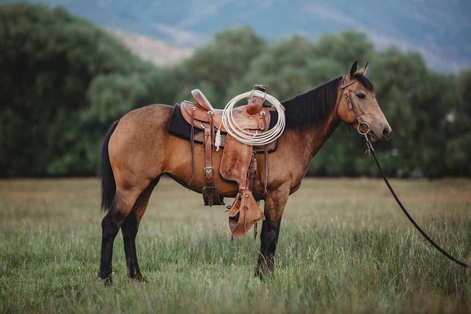 Check Out The Collection Of Catalog Horses At Heber Valley Horse Sales Cowgirl Magazine In 2020 Horses Horses For Sale Pretty Horses