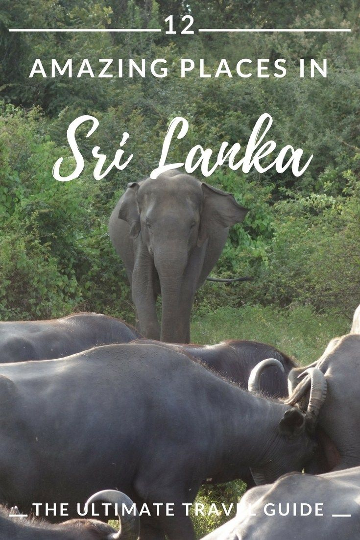 Sri Lanka travel guide: where to go and what to see.  #travel #srilanka #asia