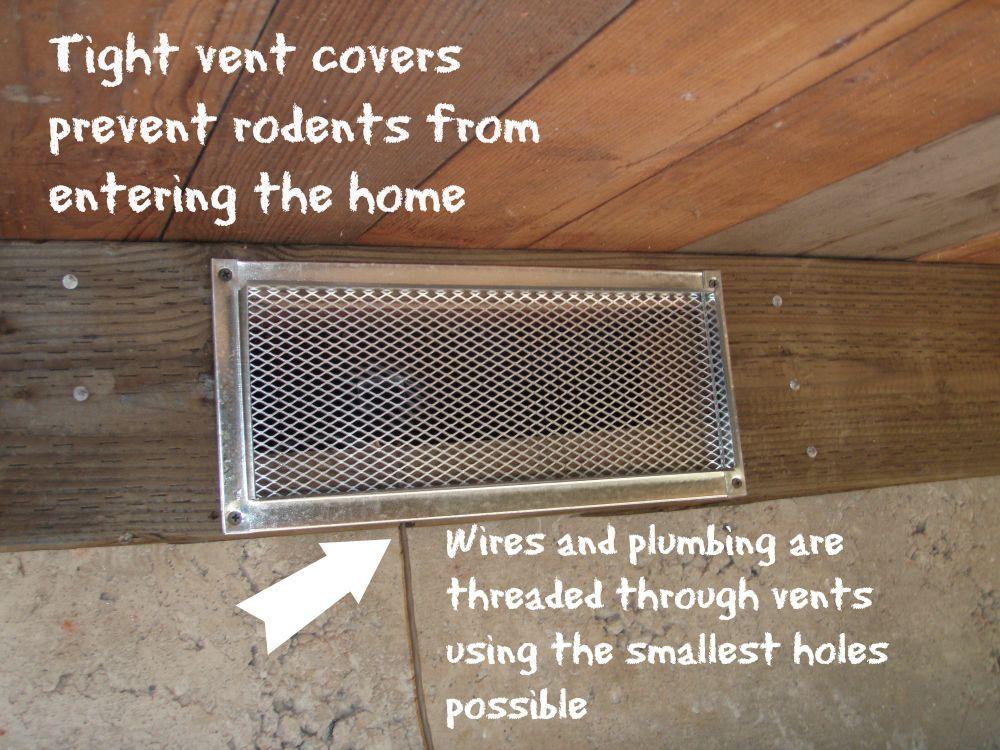 Rat Control Termite Prevention Termite Pest Control Diy Pest Control