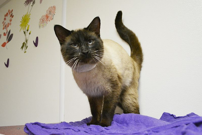 Adopt Crispin ADOPTED on Cats, Adoption, Animal control