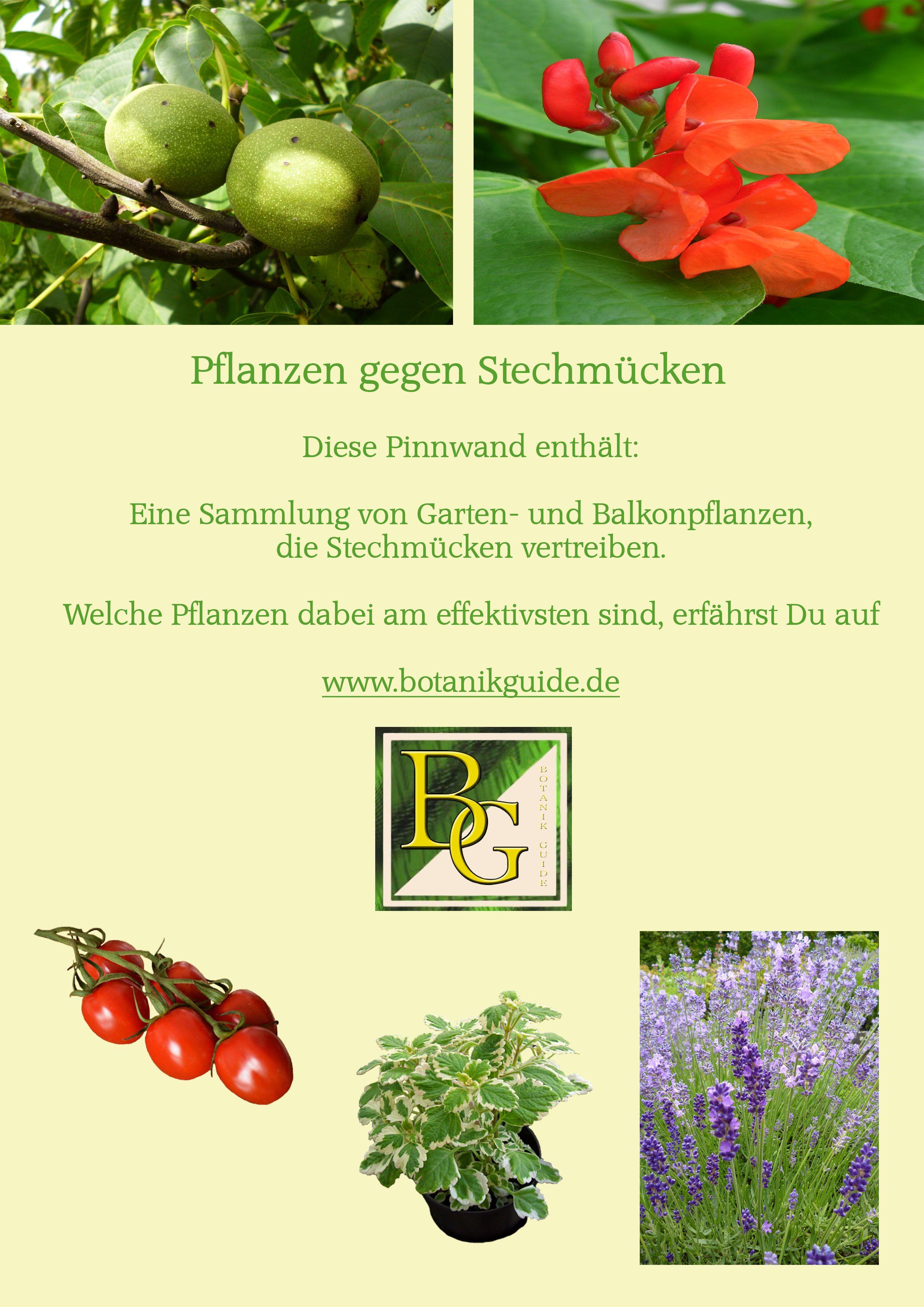 Pflanzen Gegen Stechmücken Pflanzen Gegen Stechmücken
