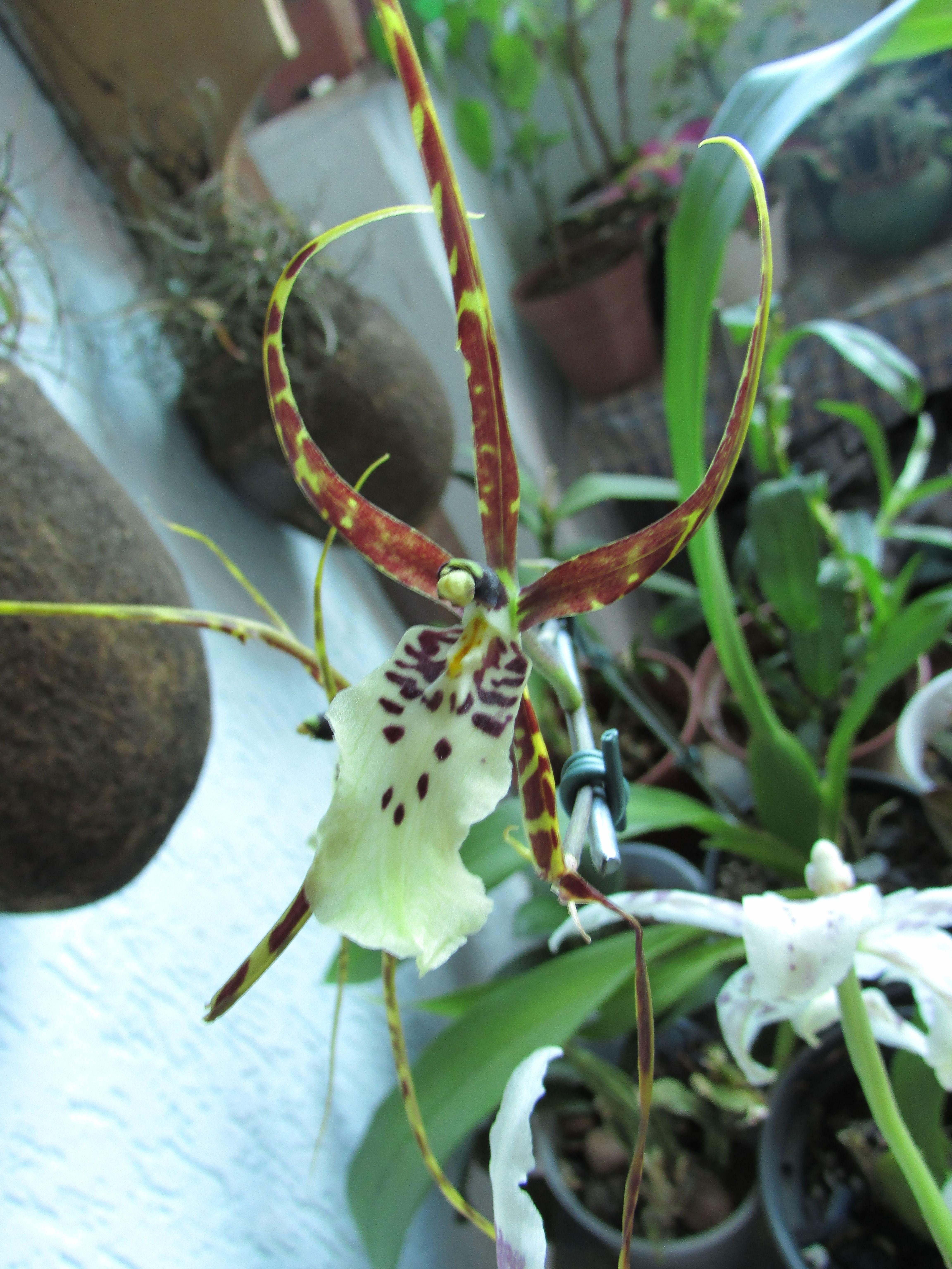 Orquideas O Que Sao Como Vivem E Como Cultiva Las Orquidea
