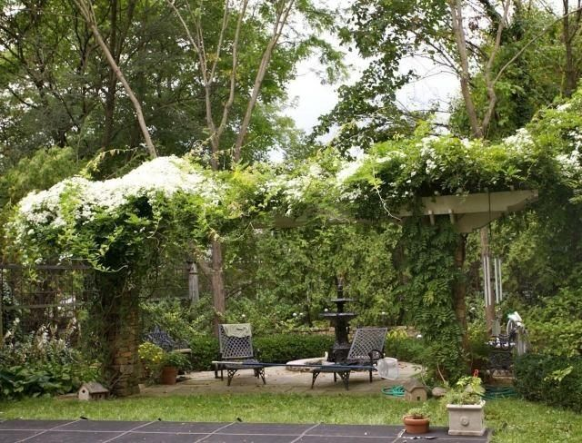 plantes grimpantes pour pergola 20 id es romantiques plante grimpante pergola et pergola en. Black Bedroom Furniture Sets. Home Design Ideas