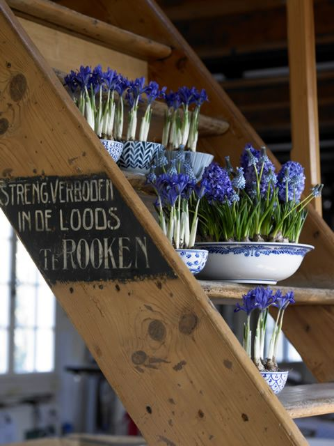 I love grape hyacinths and they look so beautiful in the blue and white china.