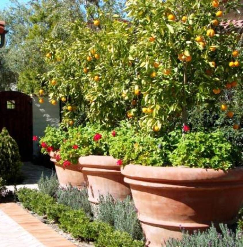 Landscaping and outdoor building options of tuscan for Garden city trees