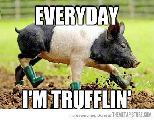 Funny Farm Animals Meme : Funny pig meme animals pinterest pigs and