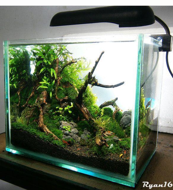 Akvaryum kurarken rnek alabilece iniz bitkili akvaryum for Nano cube fish tank
