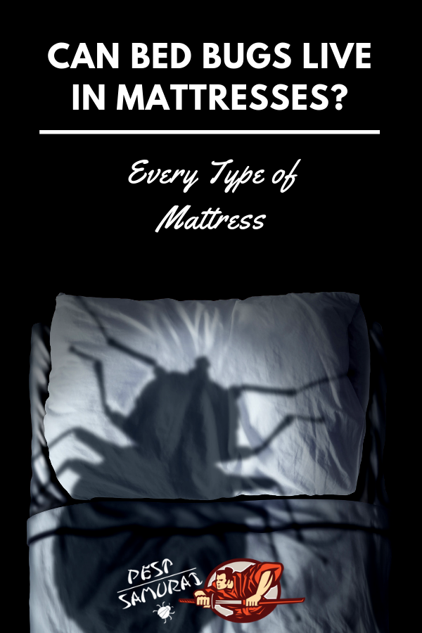 Can Bed Bugs Live in Mattresses? (Every Type of Mattress