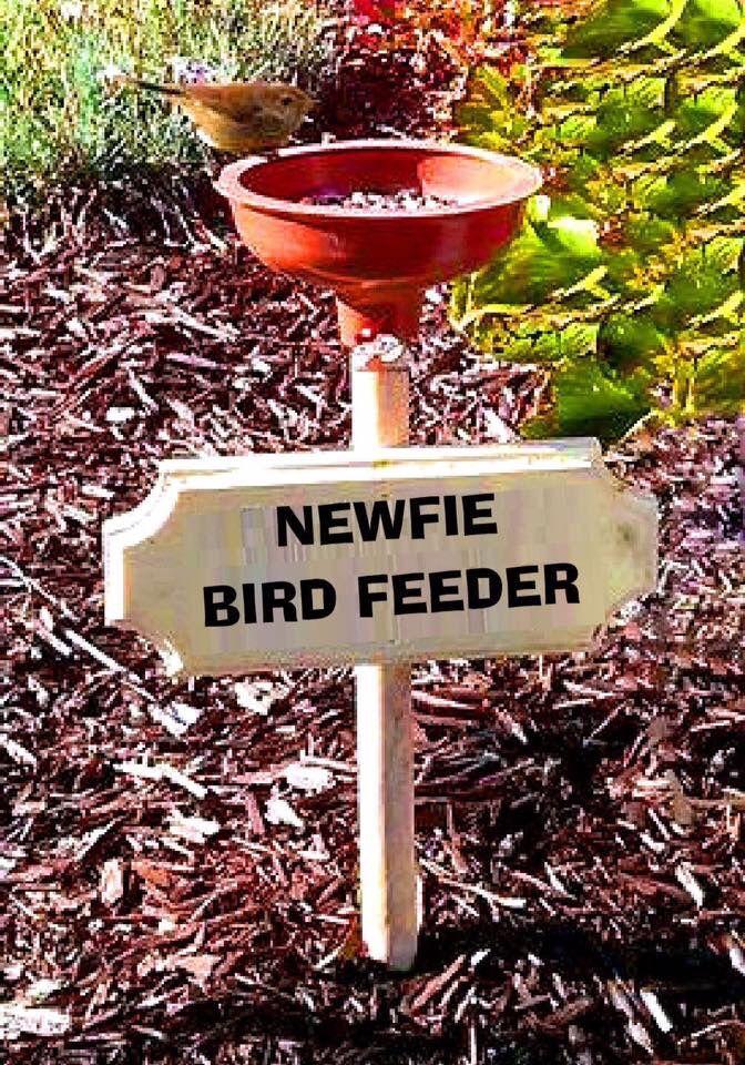 Pin von Gabriele Hapke auf Upcycling | Pinterest | Vögel ...