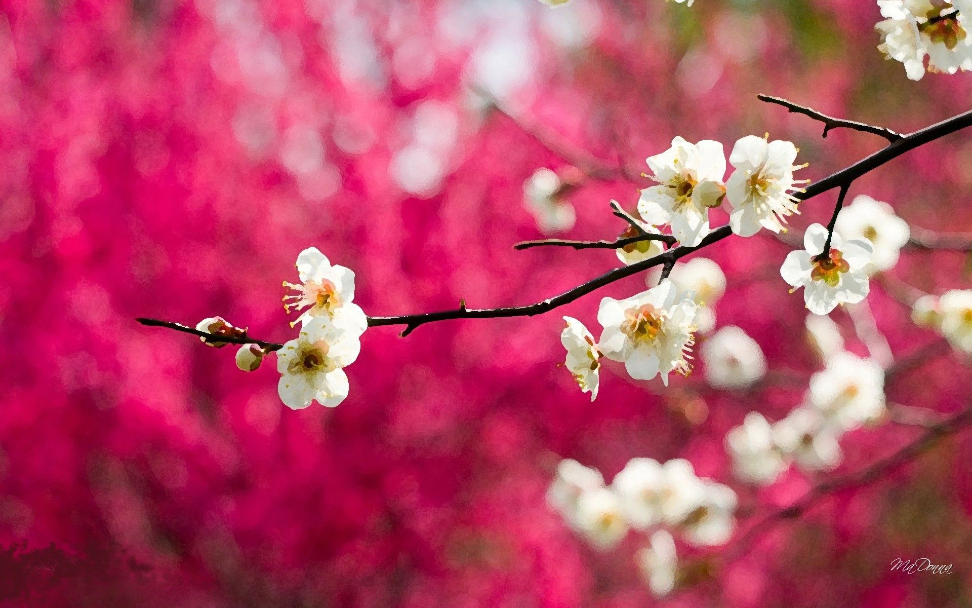 Cherry Blossom Painting Google Search Flowers