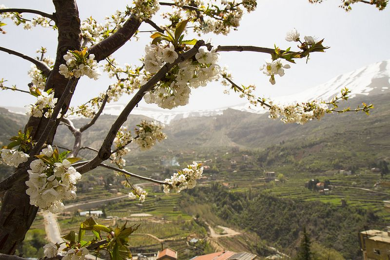 LEBANON, THE COUNTRYSIDE IN SPRING