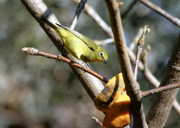 Turn your garden into a paradise for birds - IOL Lifestyle | IOL.co.za