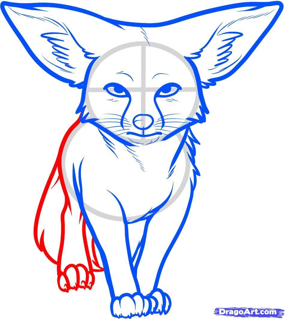Fennec fox step by step. Animal drawings, Fox drawing