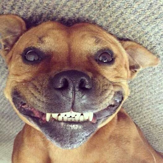 Smile It S The Weekend Smiling Animals Cute Dogs Smiling Dogs