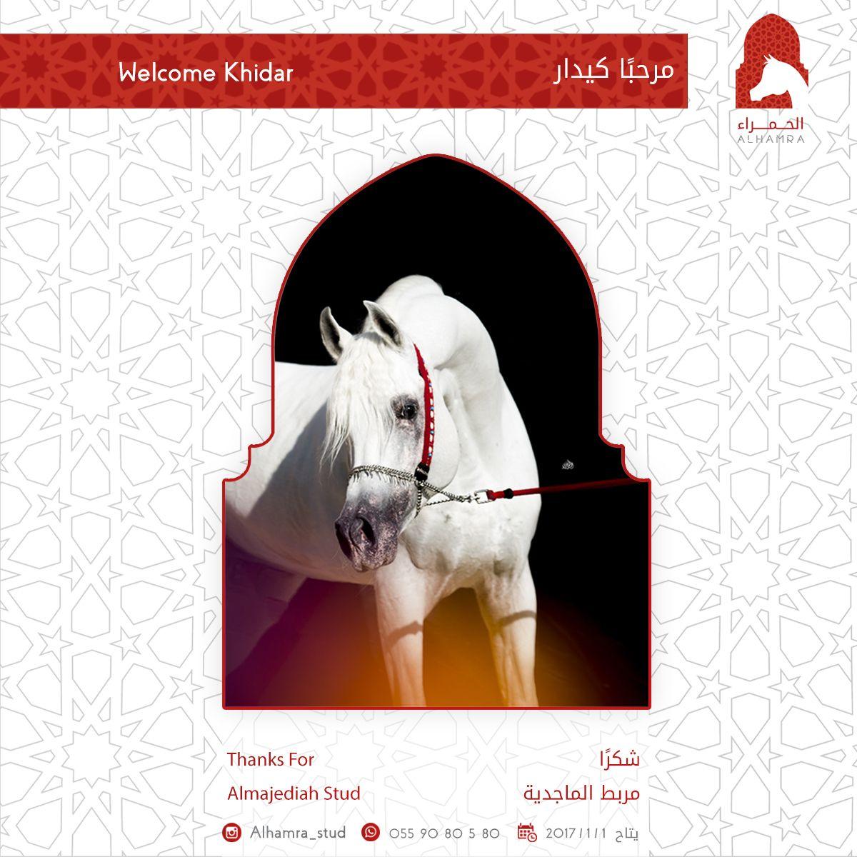 الحمراء مرحبا كيدار Horses Beautiful Creatures Arabian Horse