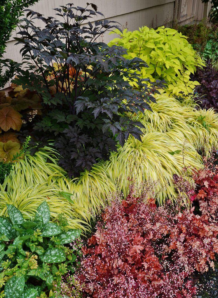38 Glorious Japanese Garden Ideas: Actaea, Aralia 'Sun King', Hakonechloa, Heuchera (Shade