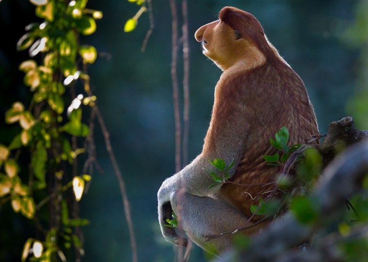 Ongebruikt In en rondom Indonesië vind je prachtig tropisch regenwoud met KU-52