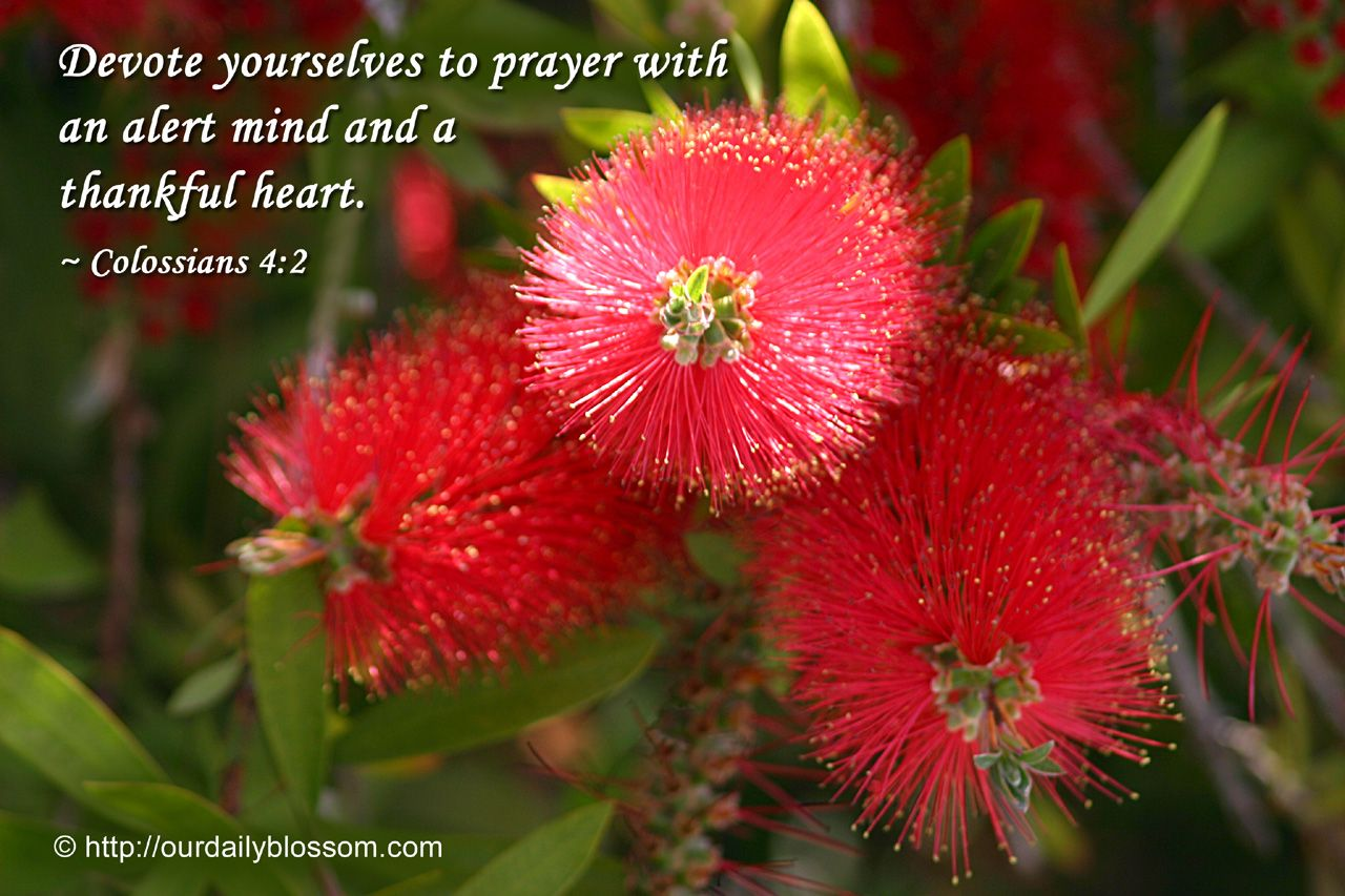 Devote yourselves to prayer with an alert mind and thankful heart. Colossians 4:2