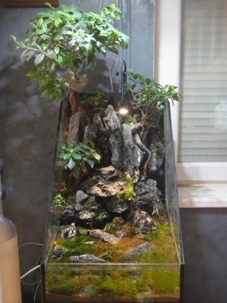 bonsai dans paludarium page 2 flore aquatique plantes et algues d 39 eau douce aquascaping. Black Bedroom Furniture Sets. Home Design Ideas