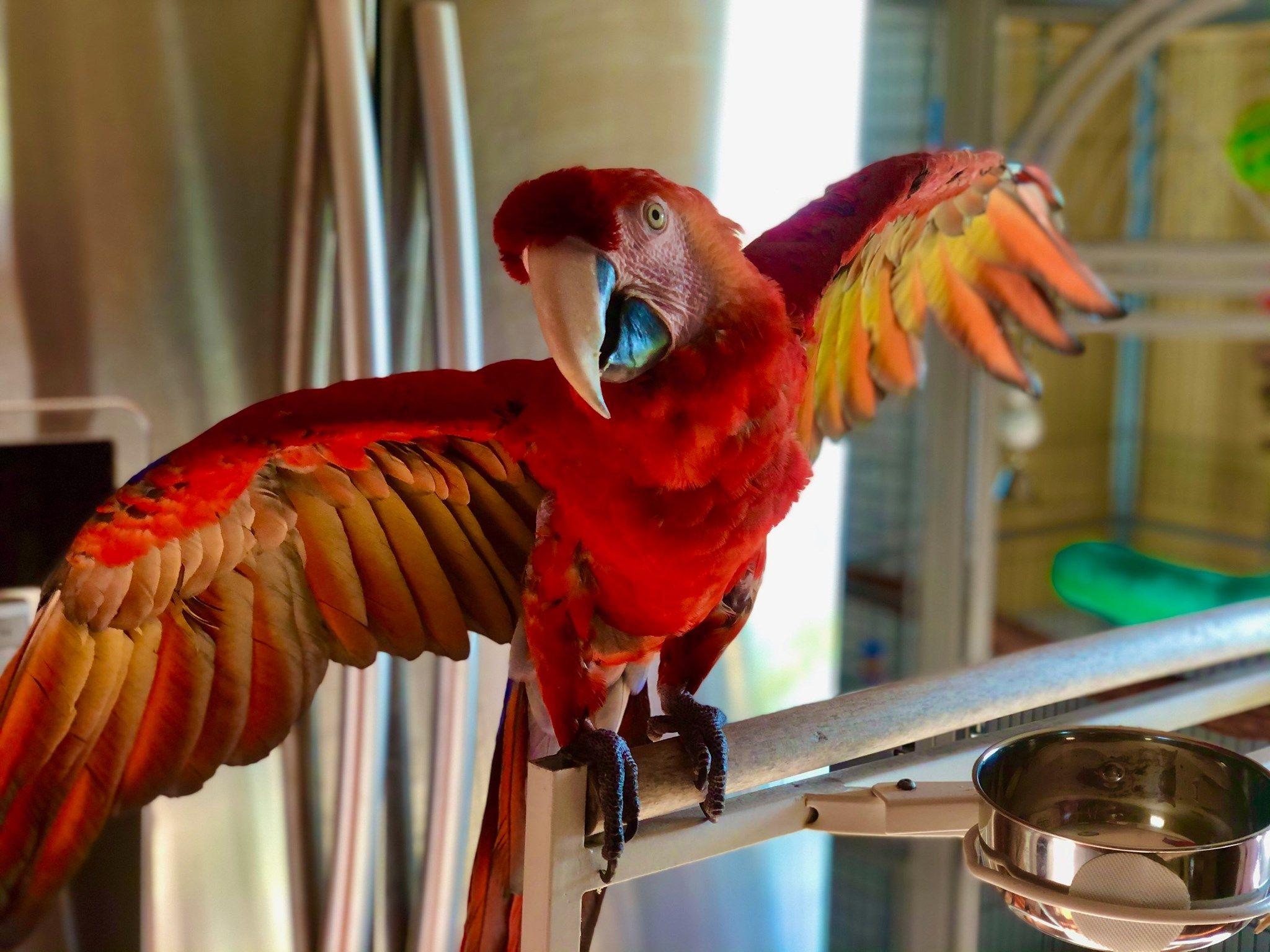 Michigan Parrot Rescue Parrot Rescue Parrot Rescue